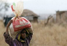 Genetically modified food aid Zambia
