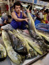 Fish Manila