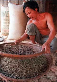Vietnamese coffee trader sifts beans