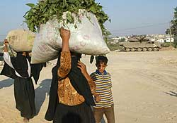 Palestinian Bedouin women carry greens as they walk past an Israeli tank